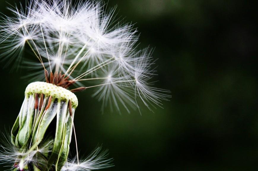 Sen – alergeny