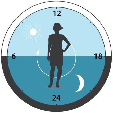 Chronotyp - zegar bilogiczny człowieka